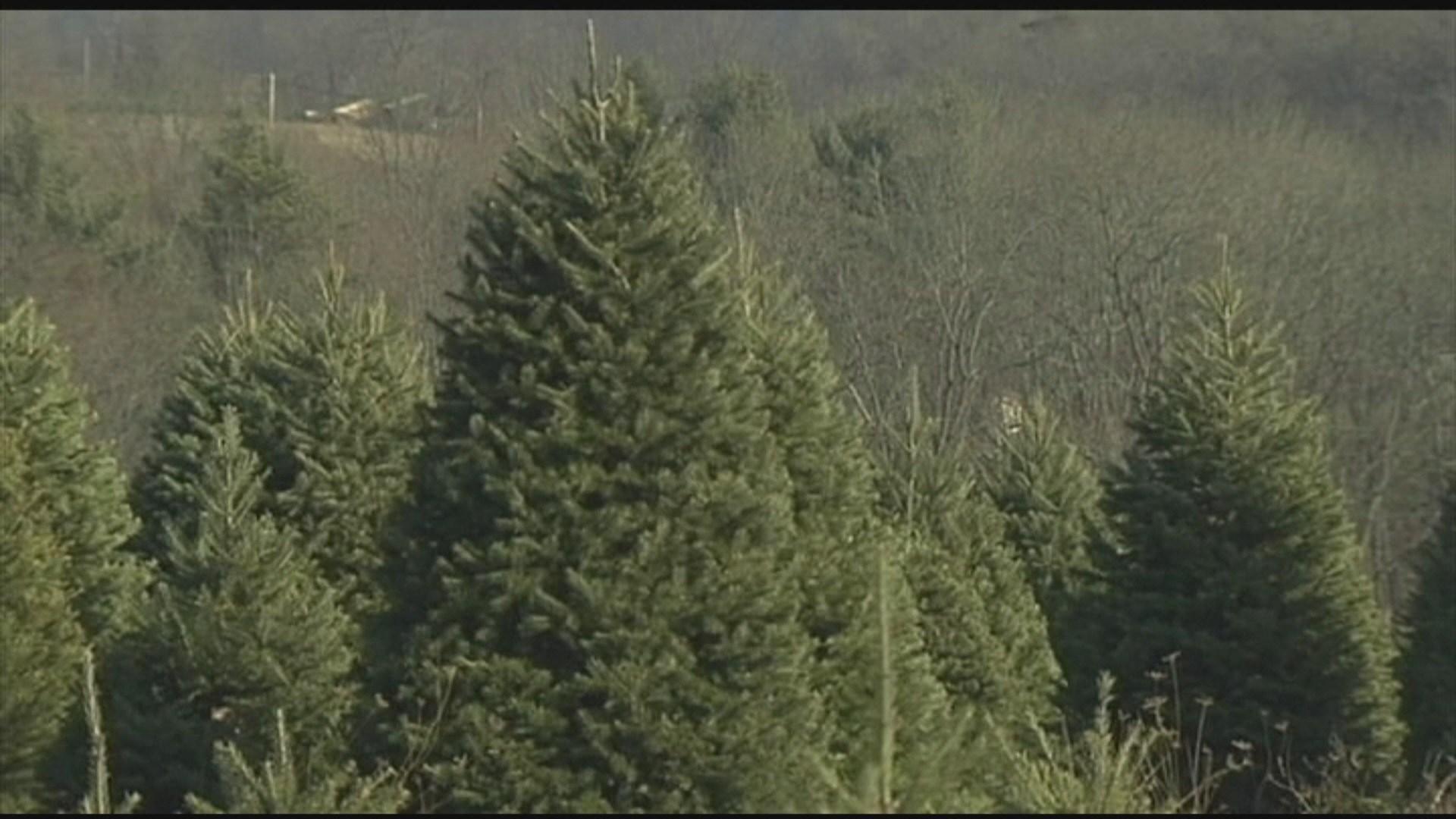 Christmas Tree Disposal Chicago News Newslocker