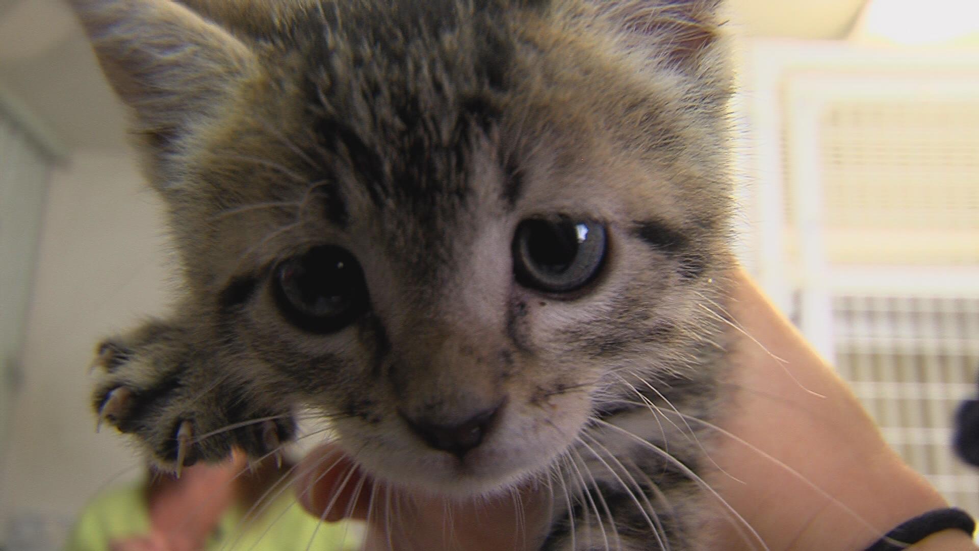 Dewitt County Step Closer To Having New Animal Shelter Wandtv Com Newscenter17 Stormcenter17